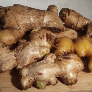ginger-harvest-2020.jpg